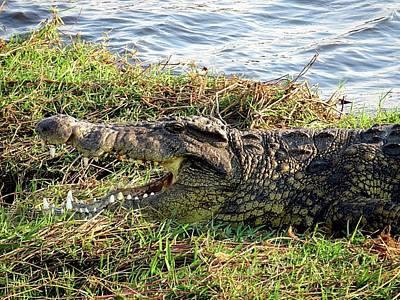Photograph - African Crocodile by Jennifer Wheatley Wolf