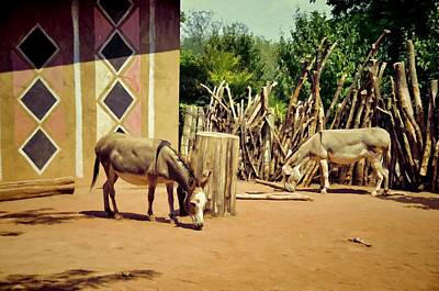 Photograph - African Donkeys by Jan Amiss Photography