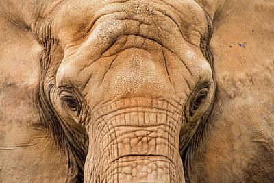 African Elephant Art Print by Don Johnson