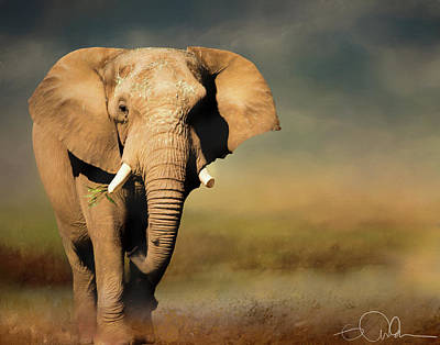 Photograph - African Elephant by Gloria Anderson