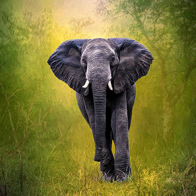Photograph - African Elephant by Maria Coulson