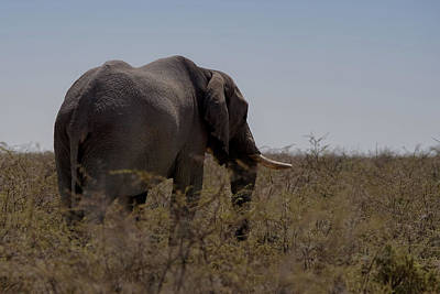 Photograph - African Elephant Namibia by Ernie Echols