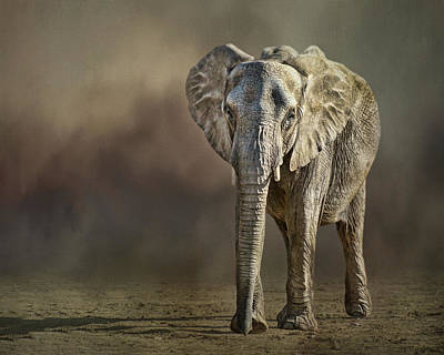 Photograph - African Elephant by Nikolyn McDonald