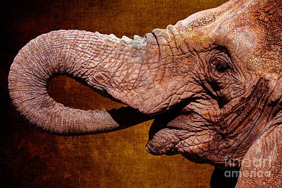 Photograph - African Elephant On Texture by Gary Whitton