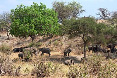 Loxodanta Photograph - African Elephant Scene by Sally Weigand