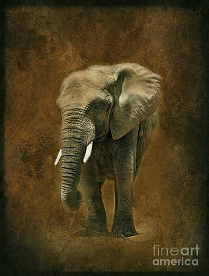 Photograph - African Elephant With Textures by Clare VanderVeen