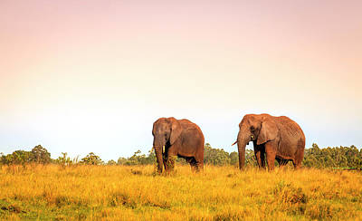 Photograph - African Elephants by Alexey Stiop