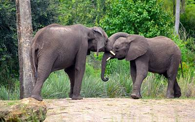 Photograph - African Elephants Interacting by Richard Bryce and Family