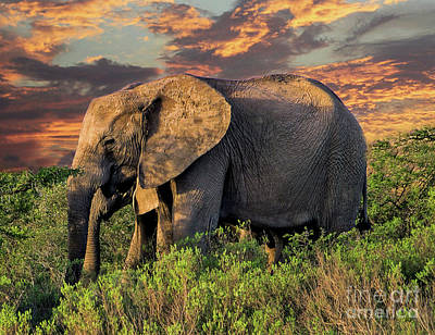 Photograph - African Elephants At Sunset by Lynn Bolt