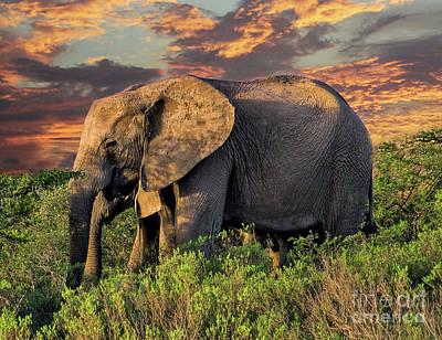 Photograph - African Elephants At Sunset by Lynn Bolt