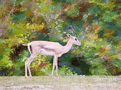 Addra Gazelle Painting - African Endangered Species by Judy Kay