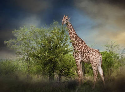 Photograph - African Giraffe by Maria Coulson