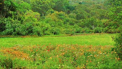Photograph - African Greens by JAMART Photography