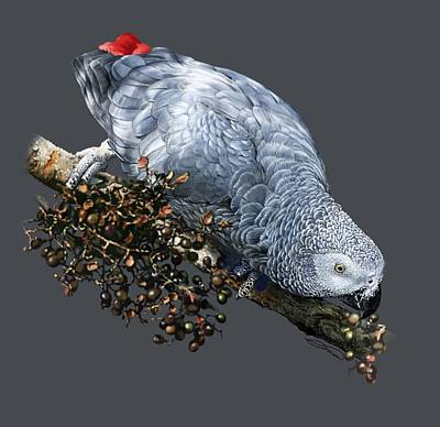 African Grey Parrot A Art Print by Owen Bell