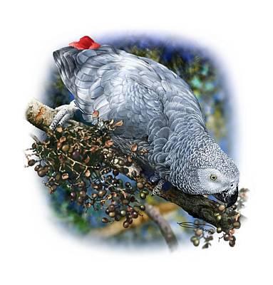 African Grey Parrot A1 Art Print by Owen Bell