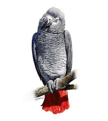 Digital Art - African Grey Parrot C by Owen Bell