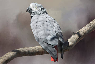 Parrot Photograph - African Grey Parrot by Donna Kennedy