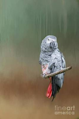 Photograph - African Grey Parrot by Eva Lechner