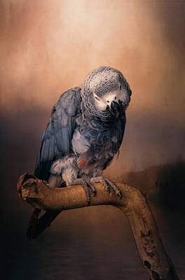 Exotic Creatures Photograph - African Grey Parrot  by Maria Angelica Maira