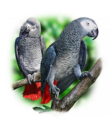 Digital Art - African Grey Parrots A by Owen Bell