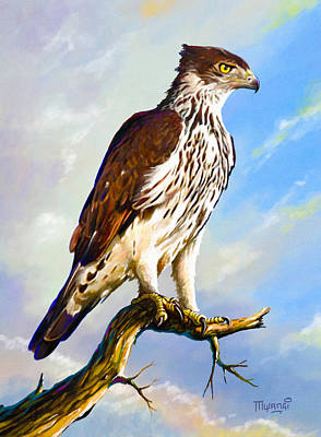 African Hawk Eagle Art Print