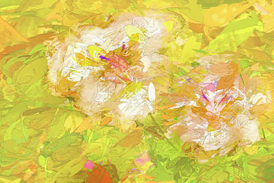 Photograph - African Iris Abstract 2 by Kay Brewer