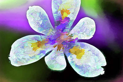 Photograph - African Iris Abstract  by Kay Brewer