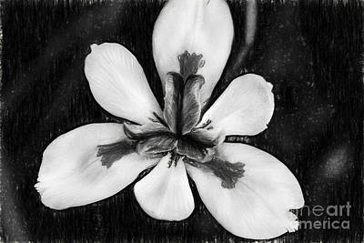 Photograph - African Iris In Black And White  by Kay Brewer