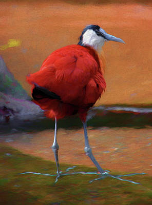 Digital Art - African Jacana Art by Chris LeBoutillier