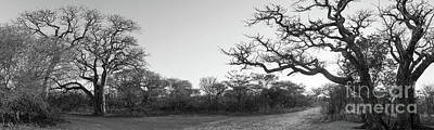 African Landscape Panorama Black And White Art Print
