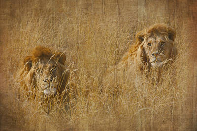 Tapestry - Textile - African Lion Brothers by Kathy Adams Clark