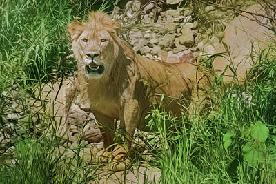 Photograph - African Lion by Nikolyn McDonald