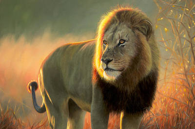 Painting - African Lion Painting Print by Jason Morgan
