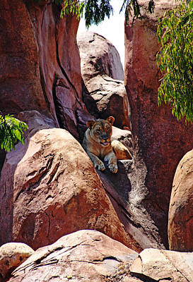 Photograph - African Lioness by Debbie Oppermann