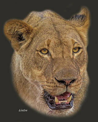 Digital Art - African Lioness Tee by Larry Linton