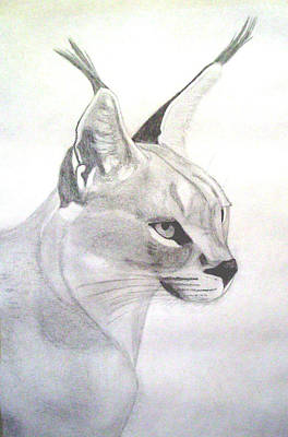 African Lynx Original