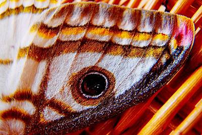 Photograph - African Moth 03 by Dora Hathazi Mendes