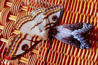 Photograph - African Moths by Dora Hathazi Mendes