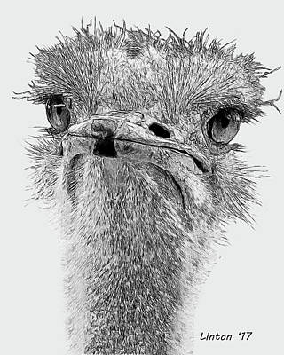 Digital Art - African Ostrich Sketch by Larry Linton