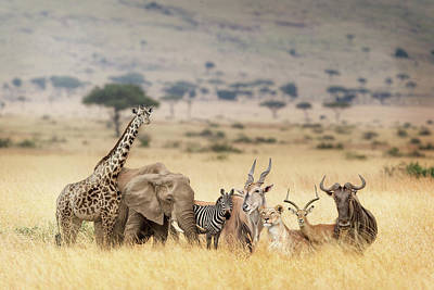 Photograph - African Safari Animals In Dreamy Kenya Scene by Susan Schmitz