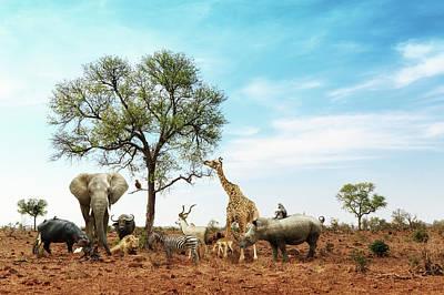 Rhinoceros Photograph - African Safari Animals Meeting Together Around Tree by Susan Schmitz