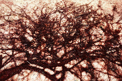 Photograph - African Shadow Tree Nr 4 by Menega Sabidussi