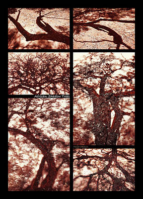 Photograph - African Shadow Trees by Menega Sabidussi