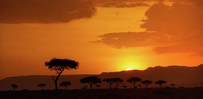 Photograph - African Sunrise by Sebastian Musial