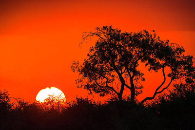 Photograph - African Sunset by Fran Gallogly