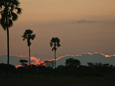 Photograph - African Sunset by Karen Zuk Rosenblatt