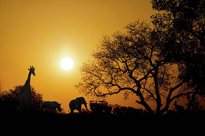 Rhinoceros Photograph - African Sunset Silhouette With Copy Space by Susan Schmitz