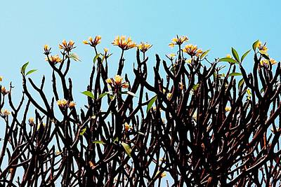 Photograph - African Tree Blooming 01 by Dora Hathazi Mendes