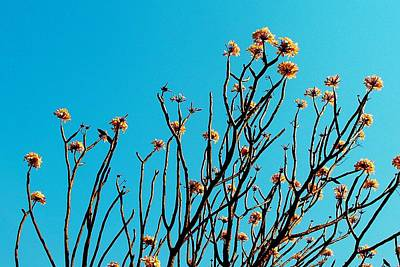 Photograph - African Tree Blooming 02 by Dora Hathazi Mendes