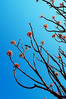 Photograph - African Tree Blooming 03 by Dora Hathazi Mendes
